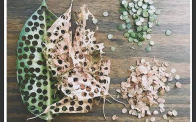 Des feuilles mortes en confettis